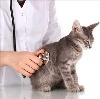 Ветеринарные клиники в Воткинске